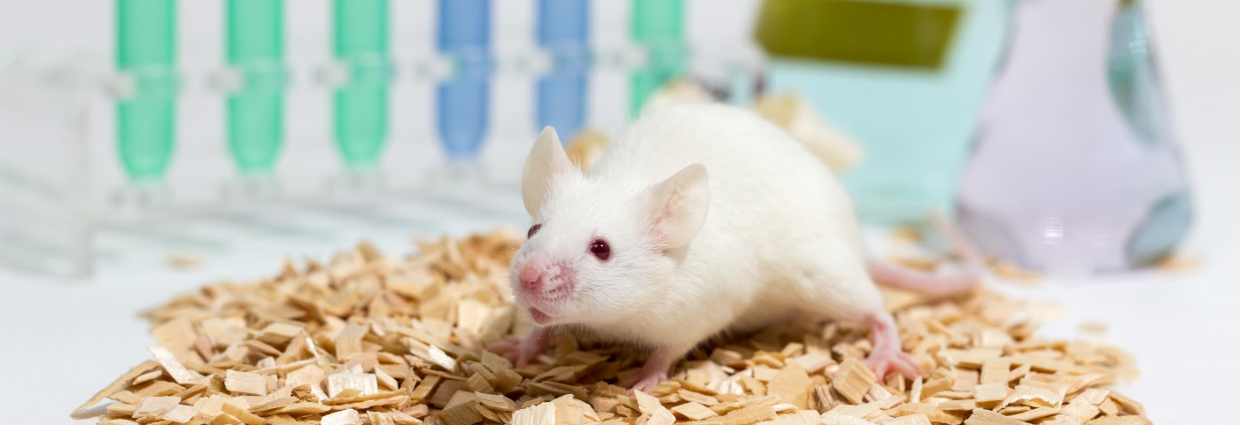 Researchers Develop New Mouse Model of Malignant Mesothelioma to Study Interaction in Cancer Cells, Immune System